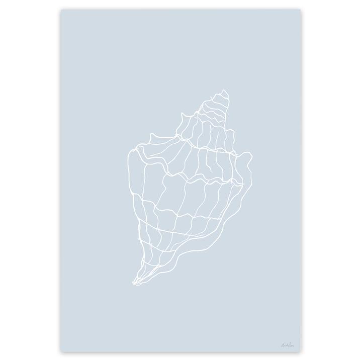 Muschel-Poster in Hellblau