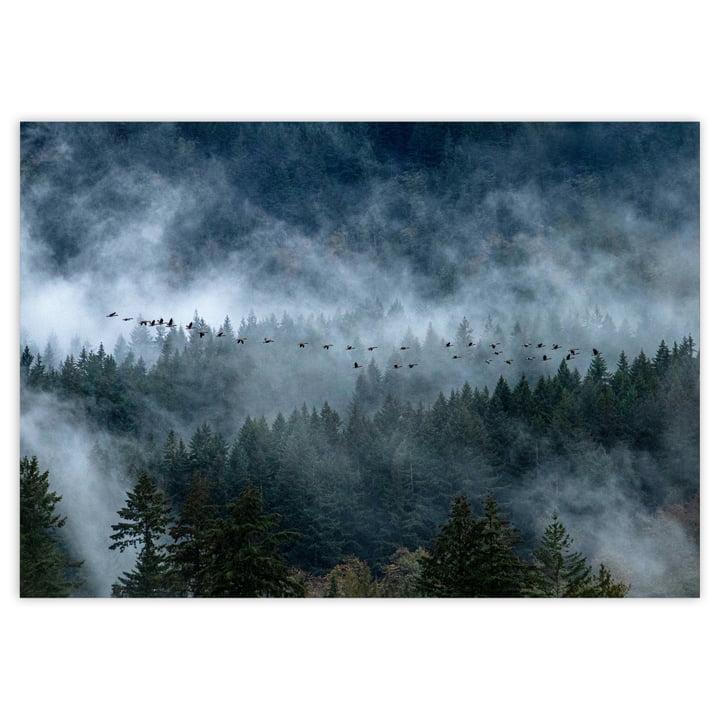 Kanadisch Wald-Landschaft als Poster