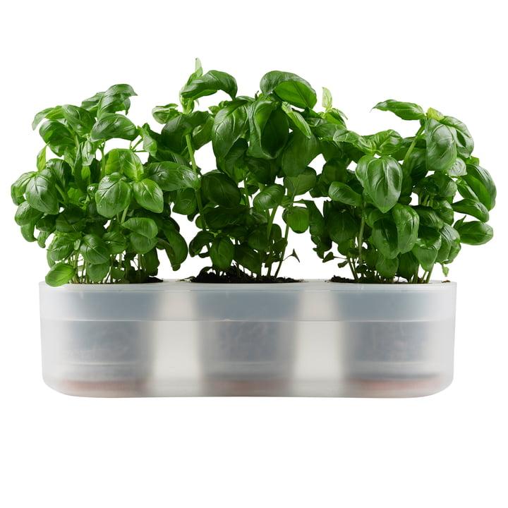 Till Planter Trible, transparent von Boskke