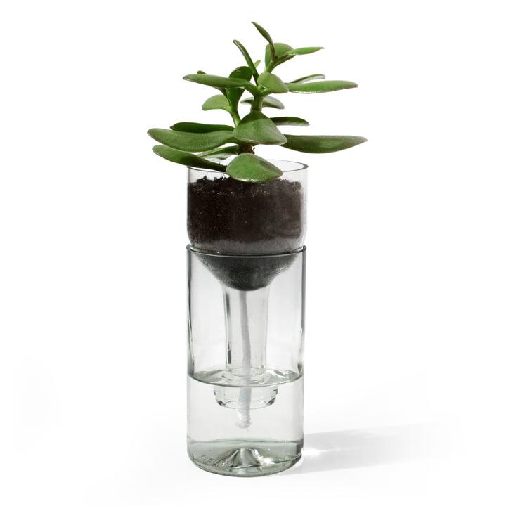 Der Self Watering Bottle Blumentopf von side by side in klarglas