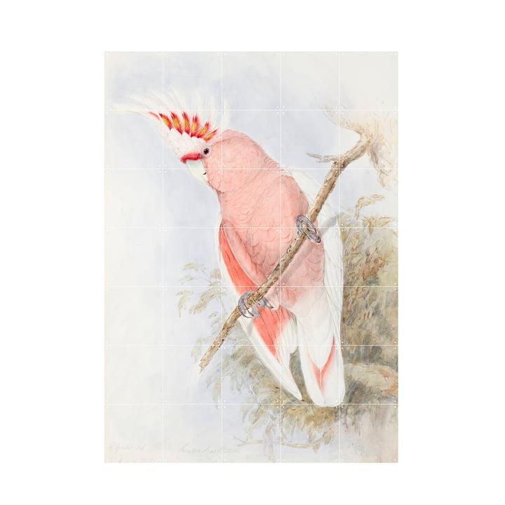 Pink Kakadu Wandbild von IXXI in der Größe 100 x 140 cm