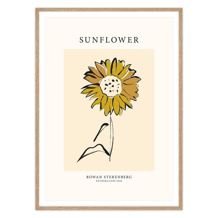 Das Mother Nature, Sunflower - Poster von artvoll mit Rahmen, Eiche