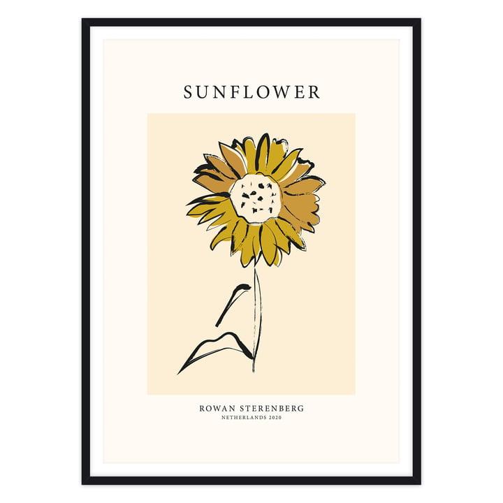 Das Mother Nature, Sunflower - Poster von artvoll mit Rahmen, schwarz
