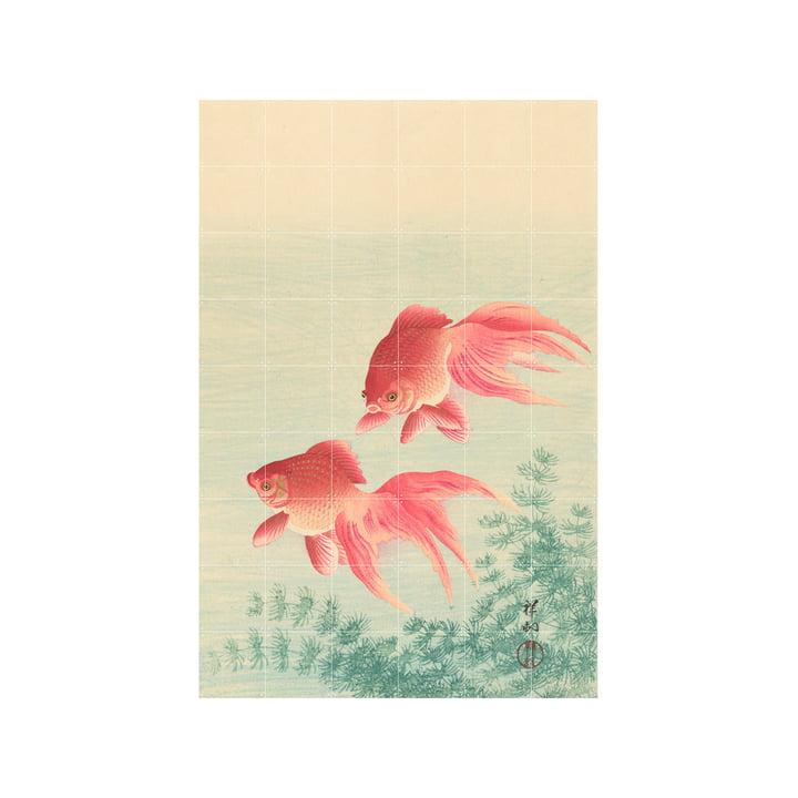 Two Goldfish Wandbild, 120 x 180 cm von IXXI
