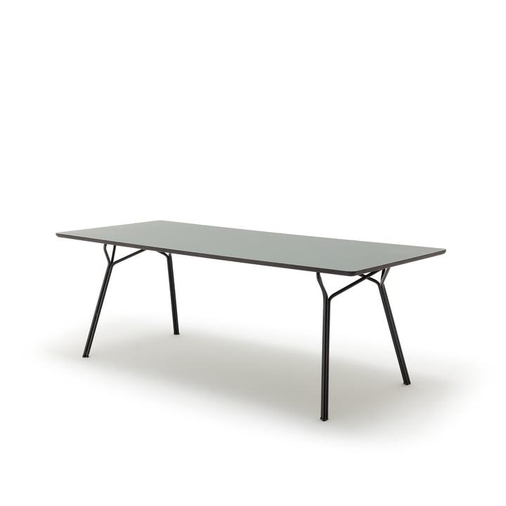 120-201 Esstisch, 160 x 90 cm von freistil in grauoliv