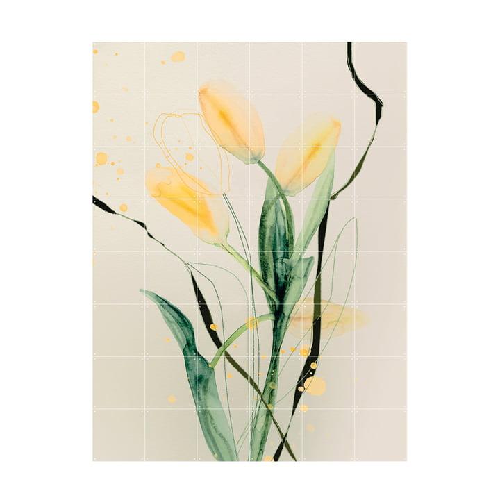 Tulip Jaune Wandbild 120 x 160 cm von IXXI