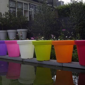 Bloom Pot ohne Beleuchtung, Farbvarianten