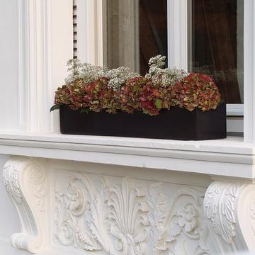amei - Der Lange Balkonkasten