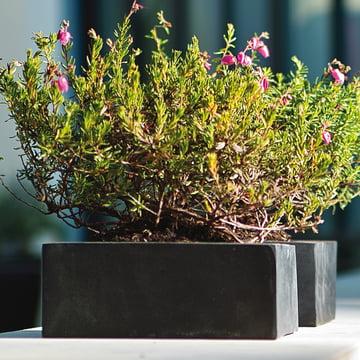 amei - Der Quadratische Pflanzgefäß, Ambiente2, schwarz