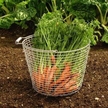 Drahtkorb für Obst und Gemüse