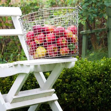 Drahtkorb für reife Äpfel