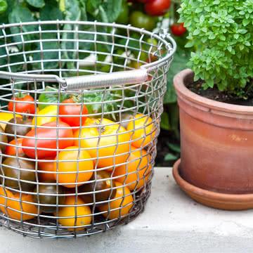 Drahtkorb für reife Tomaten