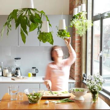 Hängender Kräutergarten in der Küche