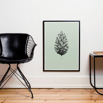 Poster Nature 1:1 Pine Cone von Paper Collective