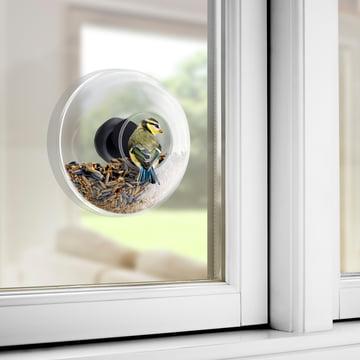 Natur direkt vor dem Fenster