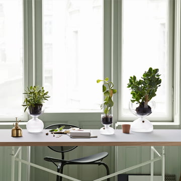 Gaia Gewächshaus aus Glas mit Nylondocht