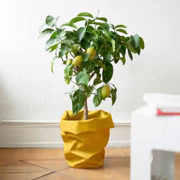 Übertopf für die Lieblingspflanze