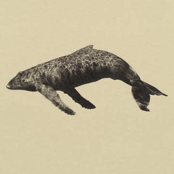Paper Collective - Whale Original