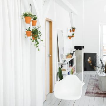 Hängende Blumenampel fürs Wohnzimmer