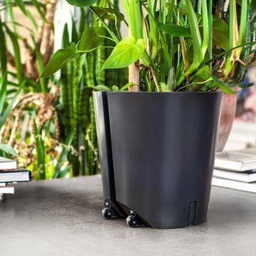 Blumen- und Pflanzentrolley von urbanature