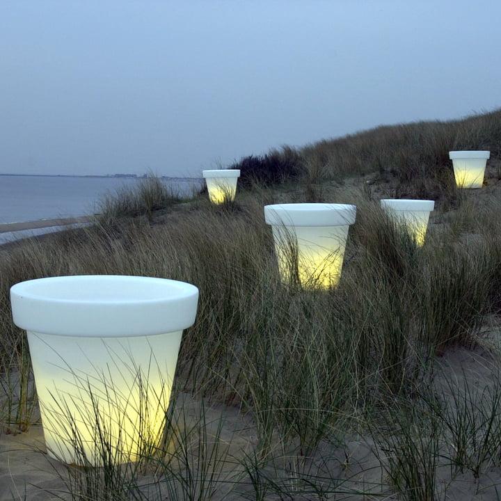 Bloom Pot mit Beleuchtung