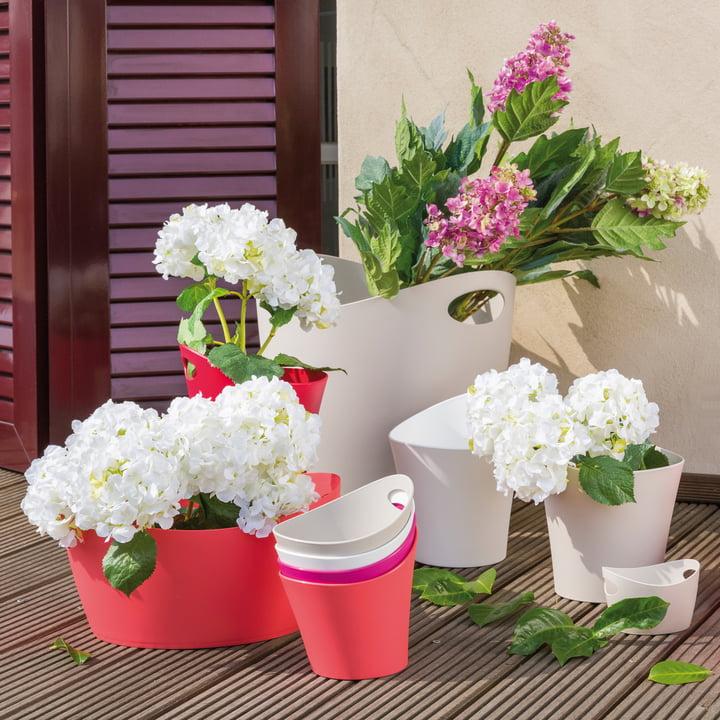 Blumentöpfe in verschiedenen Größen