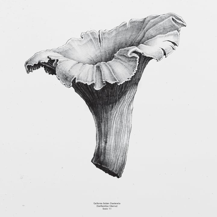 Paper Collective - 1:1 Chanterelle (weiß)