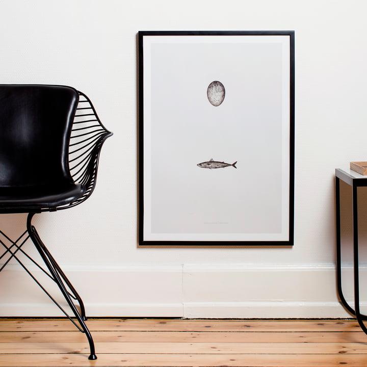 Paper Collective - Swedish Mackerel