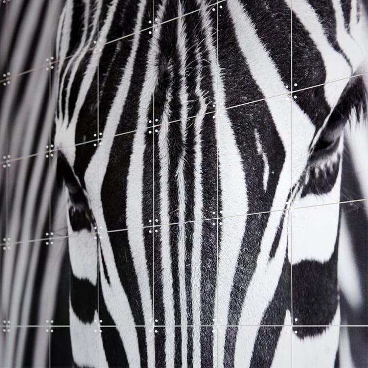 Zebra aus der Fotografie Kollektion von IXXI