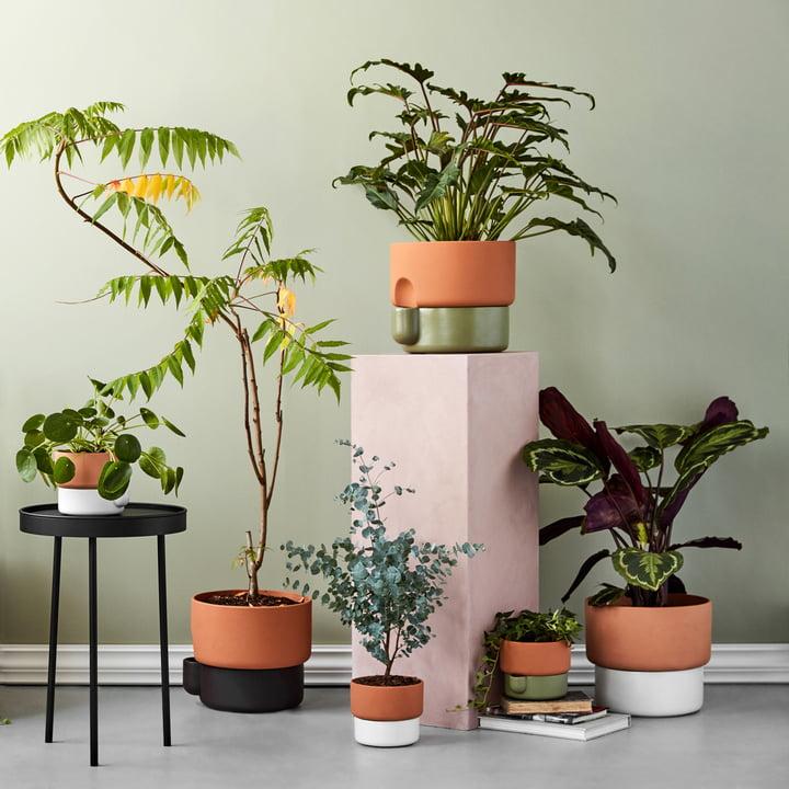 Der Northern - OasisPflanztopf