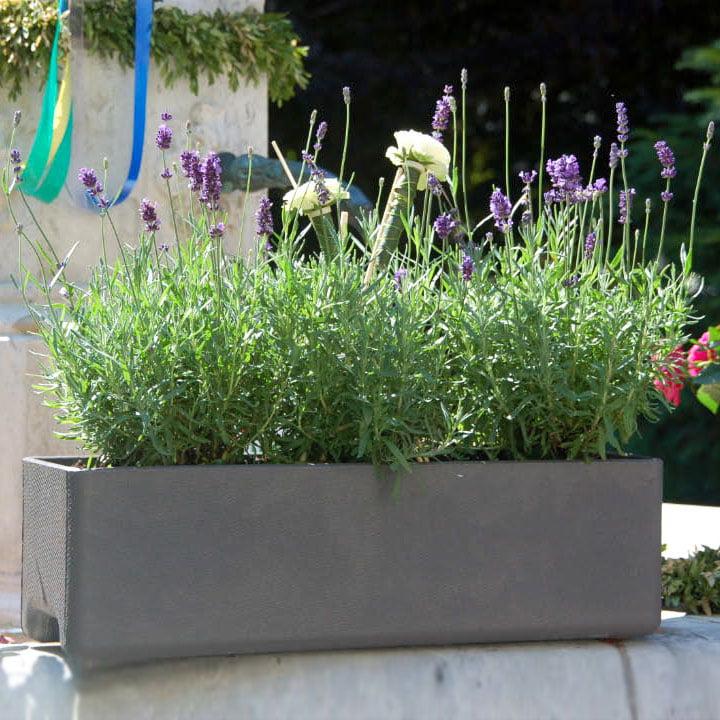 Das Eternit - Balconia Pflanzgefäß 100 x 17 x 17 cm in hellgrau mit Pflanzen