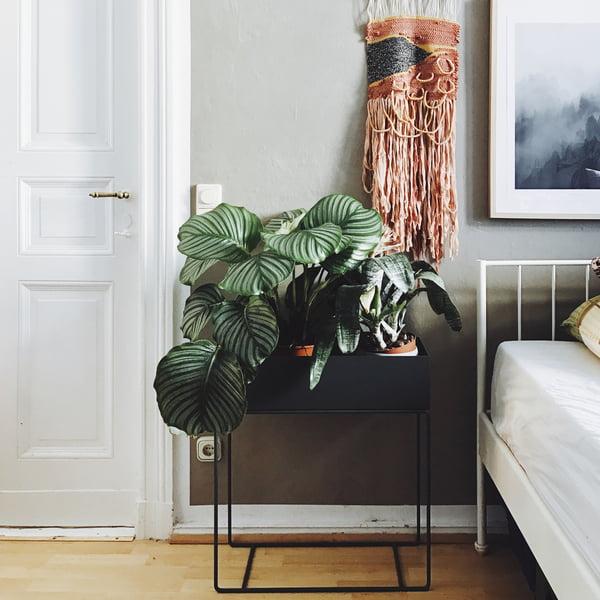 Pinterest Trend 2017: Indoor-Pflanzen